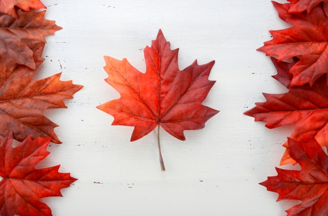 Red silk maple leaves in shape of Canadian Flag.